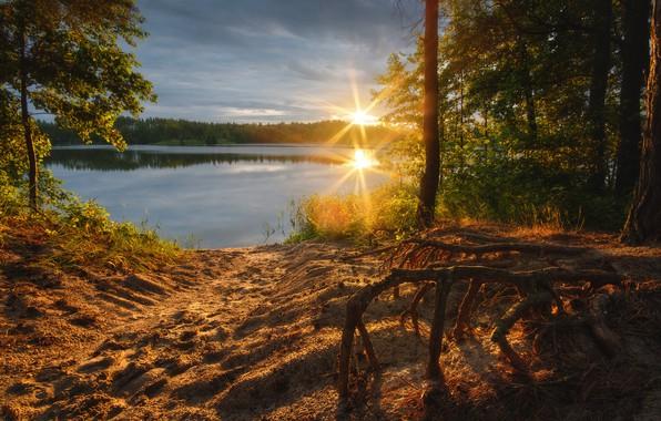 Picture sand, forest, the sun, rays, trees, landscape, nature, reflection, shore, pond, quarry, Rev Alex