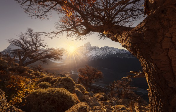 Picture the sun, rays, trees, mountains, dawn
