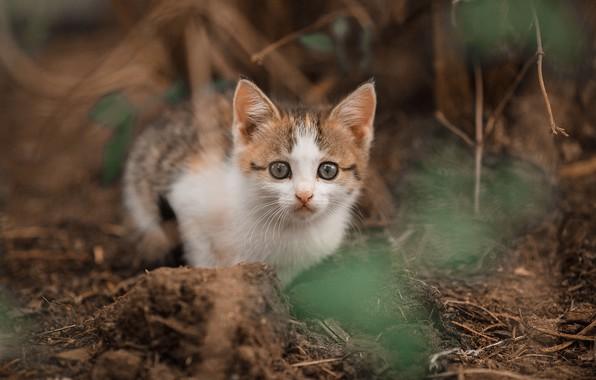 Picture look, blur, baby, muzzle, kitty, Vladimir Vasiliev