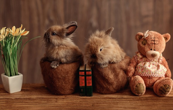 Picture flowers, table, toy, books, rabbit, bear, bear, pair, rabbits, bear, kids, a couple, plush, pots, …