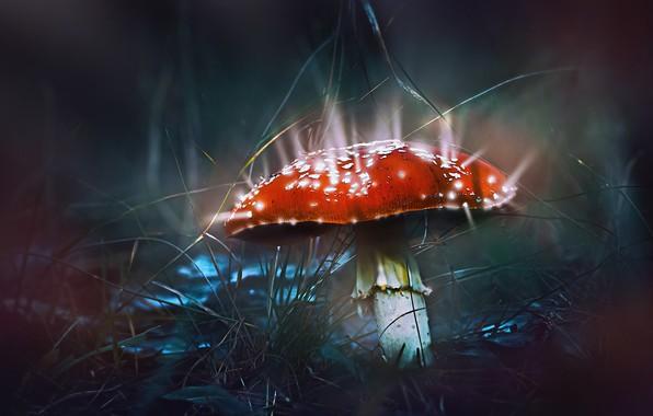 Picture grass, macro, light, nature, mushroom, treatment, mushroom
