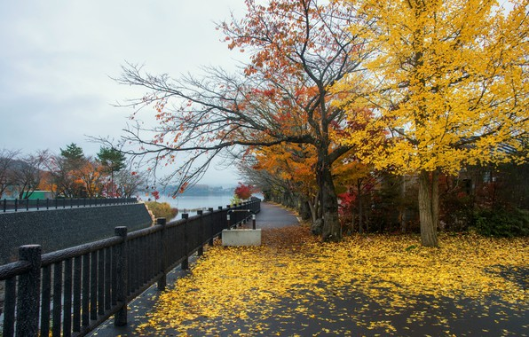 Wallpaper autumn, leaves, trees, Park, street, colorful, landscape, park, autumn, leaves, tree, street, path, fall