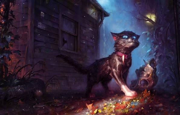 Picture cat, house, rain, foliage, skull, fantasy, art, lantern, collar, bad weather