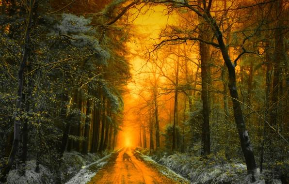 Picture road, autumn, forest, light, snow, trees, landscape, sunset, nature, Holland, Jan-Herman Visser