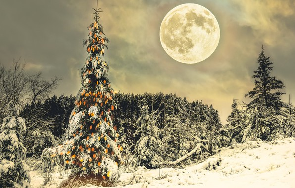 Picture winter, night, holiday, the moon, tree