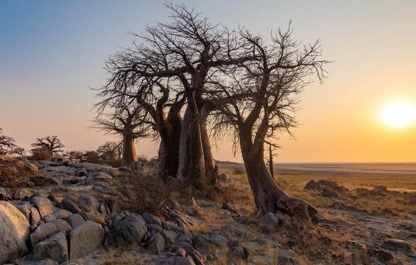 Picture Central, Botswana, Thabatskudu