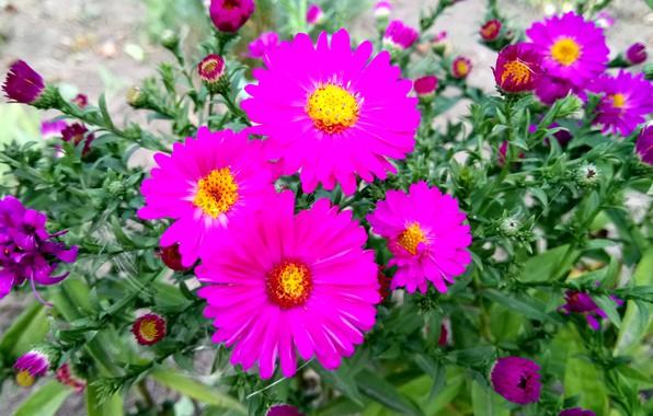 Picture Brightness, Raspberry, Сентябринки