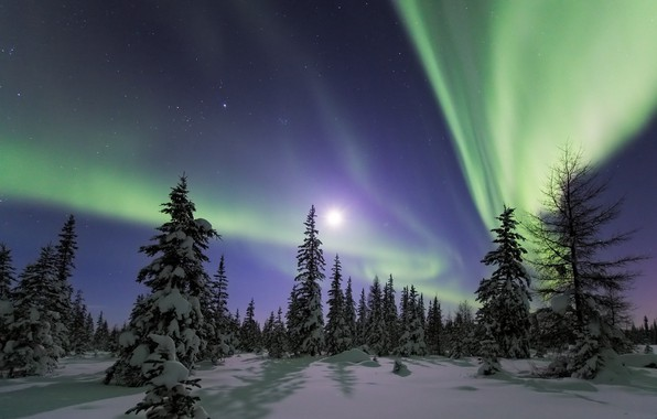 Picture the sky, snow, landscape, night, nature, beauty, Northern lights, ate, tree