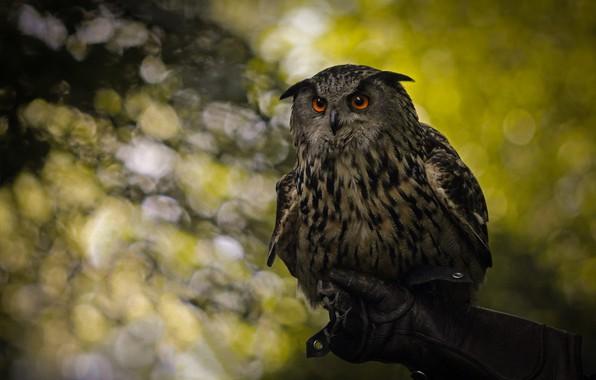 Picture look, glare, background, owl, bird, hand, glove, bokeh, film
