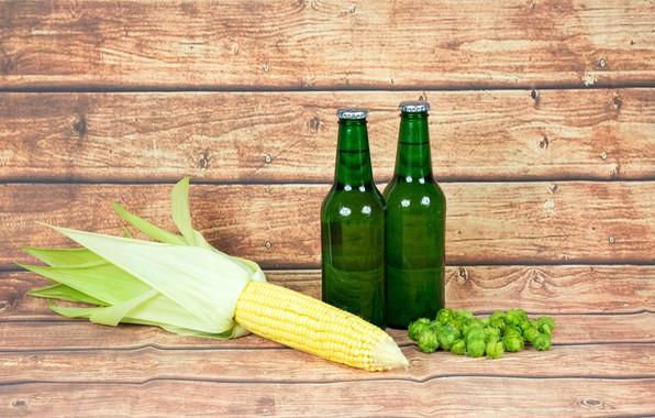 Picture beer, corn, bottle, hops