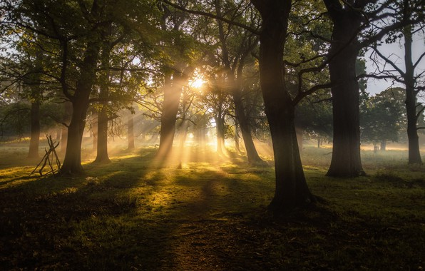 Picture forest, trees, nature, landscapes, sun, fog, dawn, greenery, sunbeams