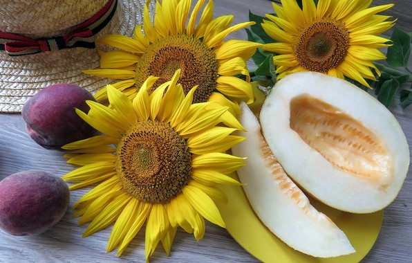 Wallpaper sunflower, hat, wood, melon, drain, naturmort