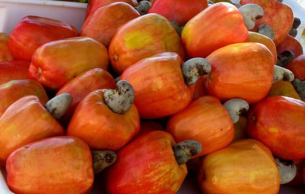 Picture nuts, Cashews, Anacardium West