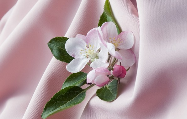 Picture leaves, background, Wallpaper, petals, stamens, fabric, picture, Apple blossoms, shades of pink, the folds of …