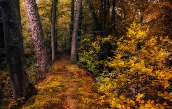 Picture autumn, forest, trees, nature, path, the bushes, Jan-Herman Visser