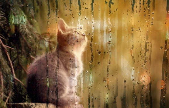 Picture kitty, tree, curiosity, misted glass
