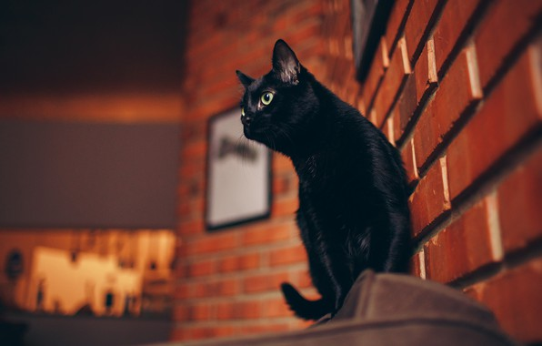Picture cat, the sky, cat, look, face, the city, pose, house, background, wall, street, black, the …