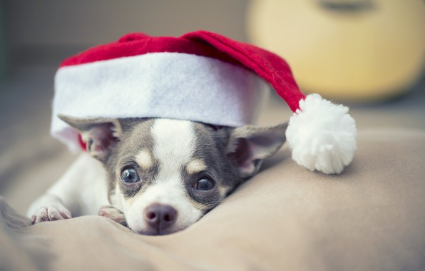 Picture dog, New Year, Christmas, Christmas, dog, New Year, xmas, Merry, santa hat