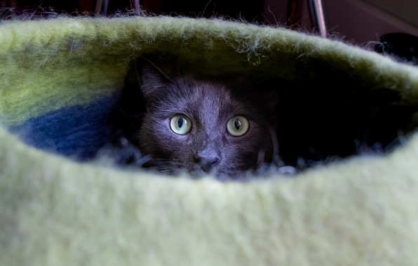 Picture cat, cat, look, face, grey, portrait, shelter, house, green eyes, bench, St., cat house