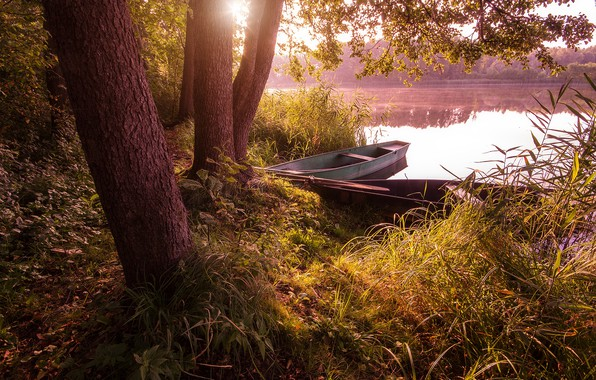 Picture grass, trees, landscape, nature, lake, trunks, boats, morning, Bank, Alexey Platonov