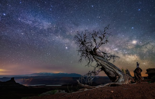 Picture stars, night, tree, desert, USA, snag, canyons, crooked, dry