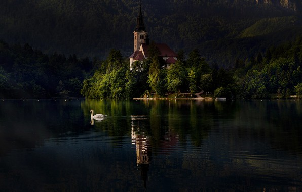 Picture lake, bird, Swan, Slovenia, Lake bled, Bled