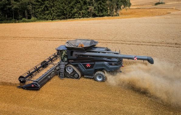 Picture Field, Dust, Wheat, 2018, Massey Ferguson, Grain, Harvester, Massey Ferguson Ideal 9T, Swift