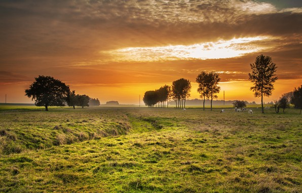 Picture the sky, trees, dawn, cows, meadow