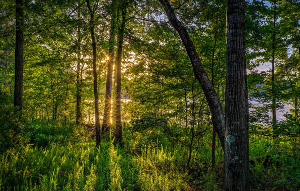 Picture greens, forest, summer, grass, the sun, trees, river, FL, USA