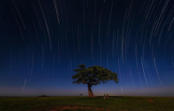 Picture stars, tree, Zebra, Savannah, the equator, stars, tree, zebra, Kenya, savannah, Kenya, Masai, Hua Zhu, …