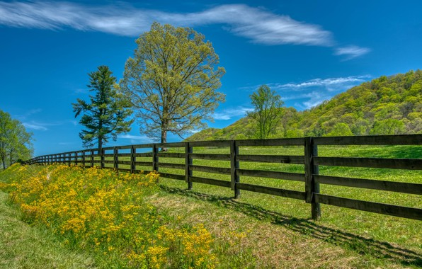 Picture trees, the fence, meadow, North Carolina, North Carolina, Transylvania, Transylvania