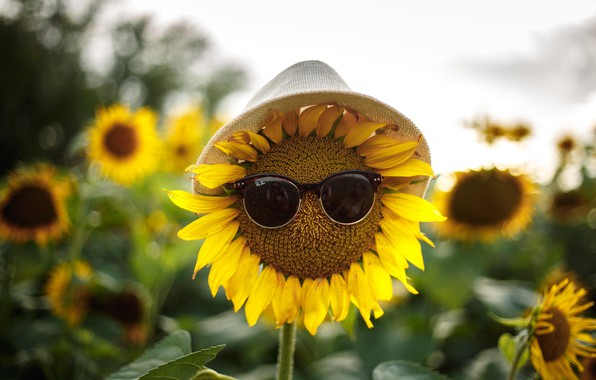 Picture reflection, hat, glasses, photographer, Sunflowers, Anna Kovaleva