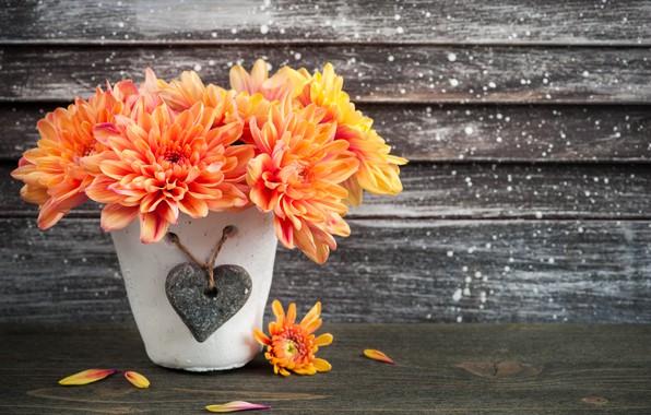 Picture flowers, Orange, chrysanthemum, pot