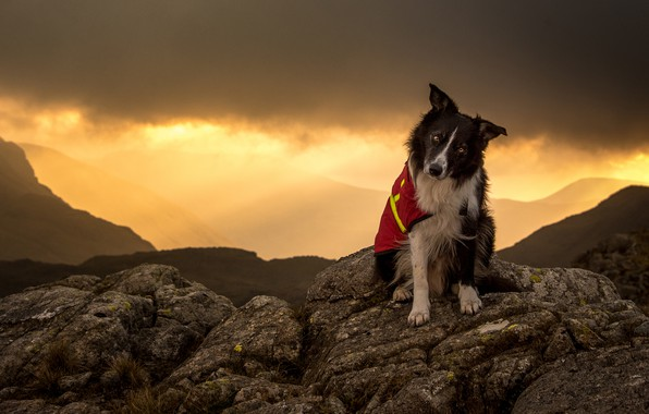 Picture the sky, look, face, light, sunset, mountains, clouds, nature, pose, stones, background, hills, clothing, dog, …