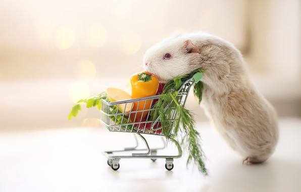 Picture Guinea pig, truck, vegetables