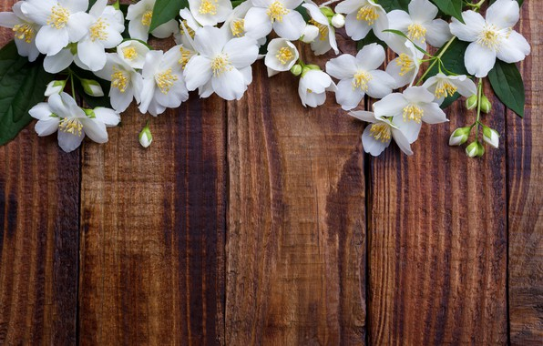 Picture flowers, spring, white, white, flowering, wood, blossom, flowers, spring