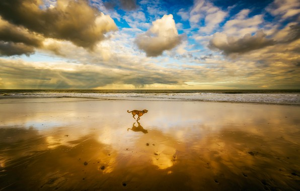 Picture BEACH, SEA, HORIZON, The OCEAN, The SKY, SAND, CLOUDS, REFLECTION, SHORE, MIRROR, DOG