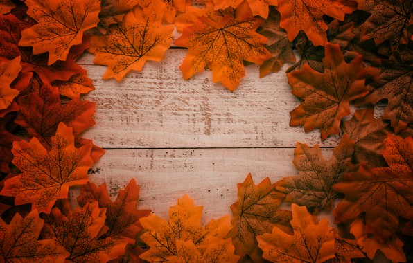 Picture autumn, leaves, background, tree, colorful, Board, wood, background, autumn, leaves, autumn, maple