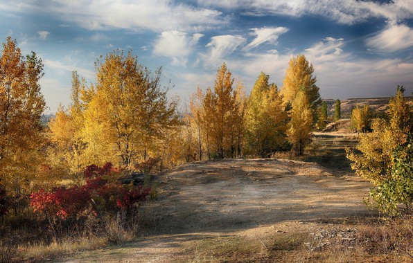 Picture autumn, trees, landscape, nature, beauty, yellow trees