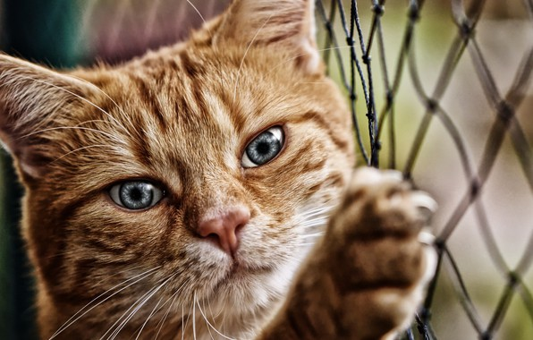 Picture cat, cat, look, face, animal, mesh, paw