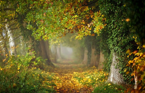 Picture autumn, forest, leaves, trees, branches, fog, Park, trunks, foliage, track, haze, alley, falling leaves, path, …