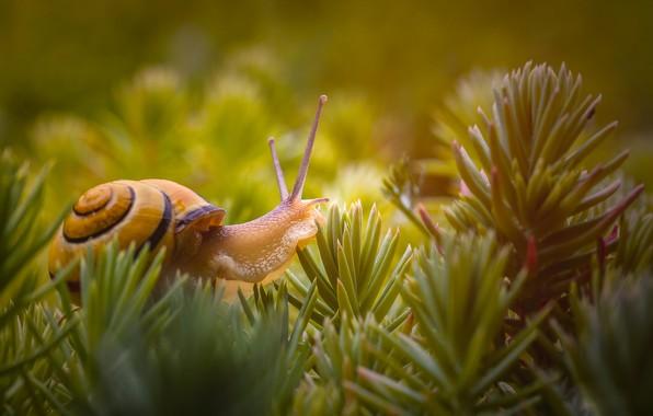 Picture macro, snail, needles