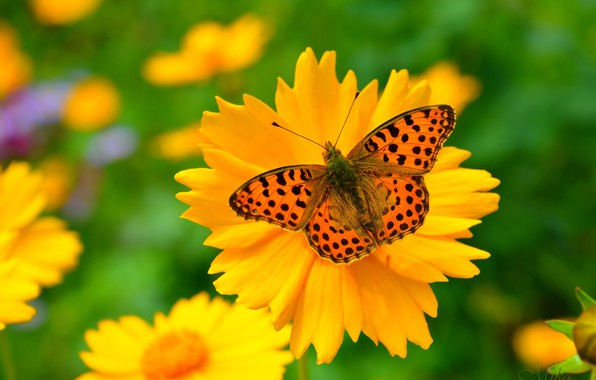 Picture Macro, Spring, Butterfly, Flowers, Flowers, Spring, Macro, Butterfly