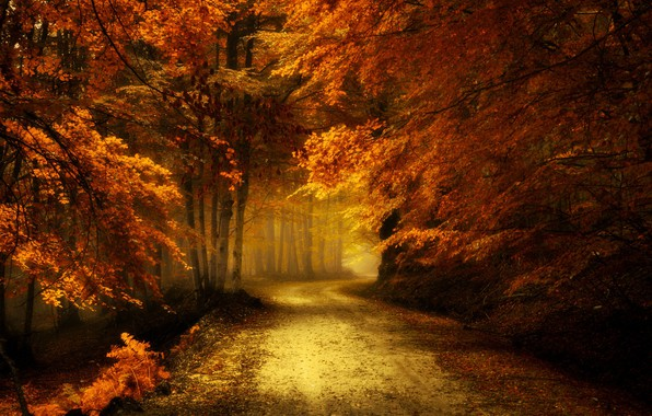 Picture road, autumn, forest, landscape, nature, beauty