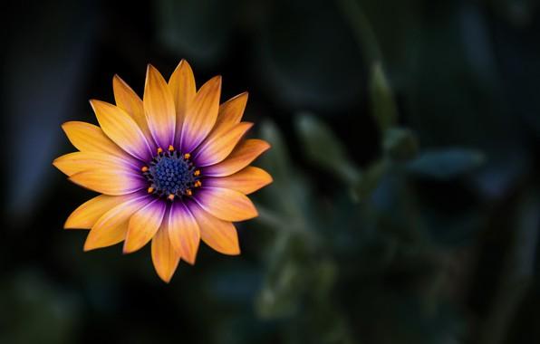 Picture flower, close-up, yellow, flowers, macro, orange, blur, purple, 4k uhd background