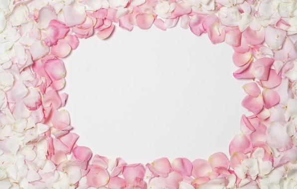 Picture background, petals, pink, pink, background, petals, frame, floral