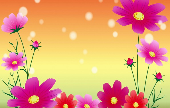 Picture flowers, postcard, kosmeya, template, blank