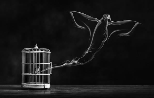 Picture freedom, bird, cell, bird, freedom, cage, Alaa Al-Shurafa