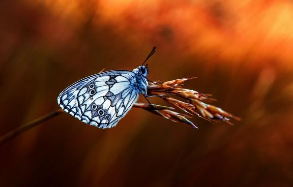 Picture butterfly, branch, bokeh