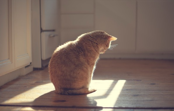 Picture cat, light, house